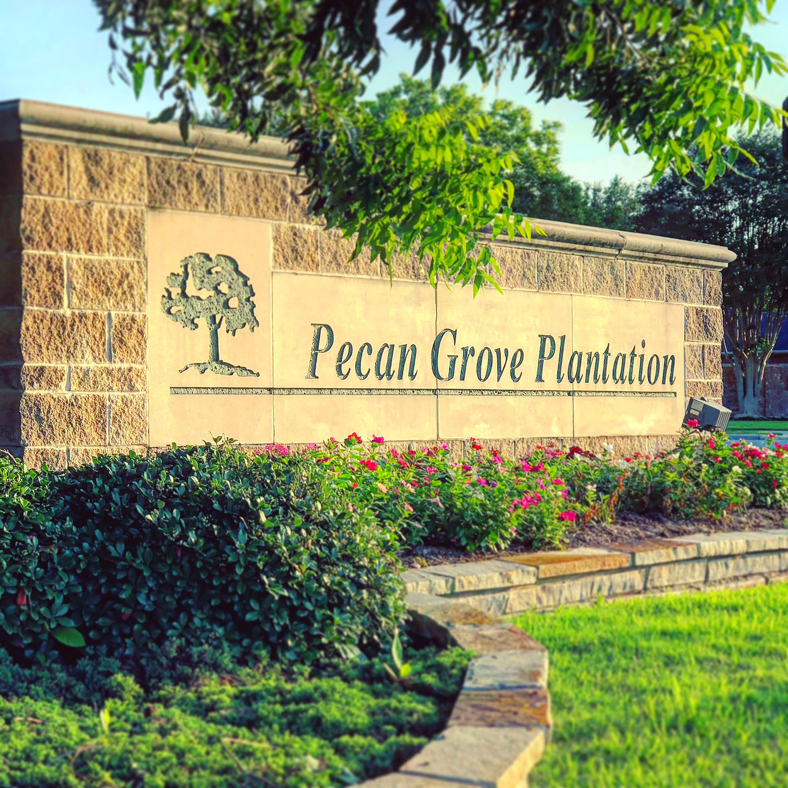 pecan-grove-plantation-texas